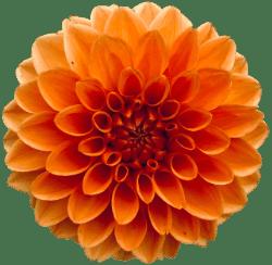 Afscheidsfotografie lieve woorden en bloem