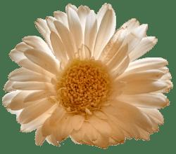 Lieve woorden van Monica en bloem